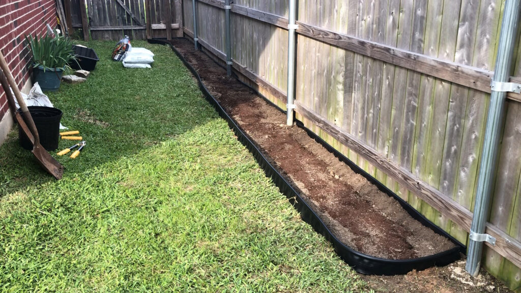 Blackberry raised bed row